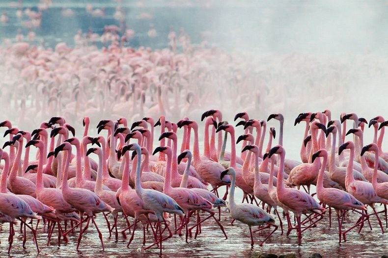 Lake Nakuru - Pink lake   Why Kenya Should Be Your Next Travel Destination